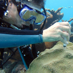 Gene Therapy Could Help Corals Survive Climate Change: Scientific American | Belize in Social Media | Scoop.it