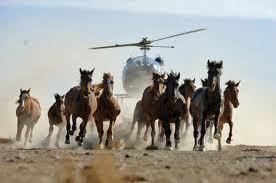 The Compassionate Choice: Saving America's Wild Horses | Compassion in Action | Scoop.it