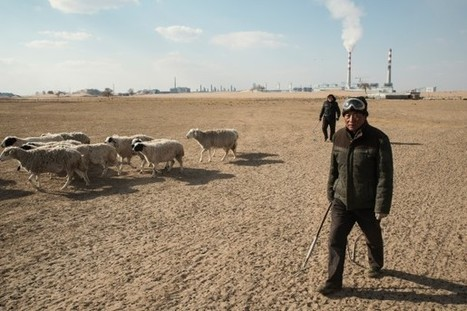 In China's Inner Mongolia, mining spells misery for traditional herders | Mongolia Times | Scoop.it