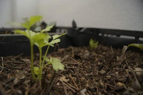Ante crisis alimentaria, huertos urbanos, opción | Cultivos Hidropónicos | Scoop.it