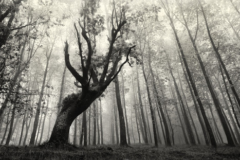 Foggy Forests of Ancient Trees Pruned for Charcoal in Basque Country Photographed by Oskar Zapirain | Bouche à Oreille | Scoop.it