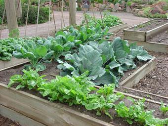 Use Epsom Salt for Larger, Sweeter Garden Yield - Home and Garden Digest | Gardening | Scoop.it