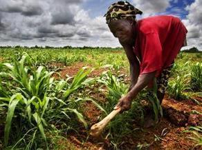 Au Mali, pendant la guerre, l'accaparement des terres continue | the world agriculture | Scoop.it