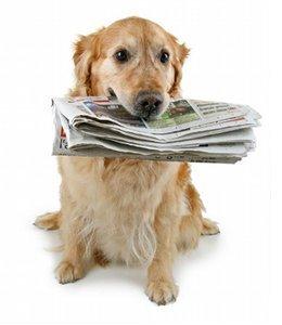 Dresser-son-chien.com : Trucs et astuces pour Dresser son chien | Dresser son chien | Scoop.it
