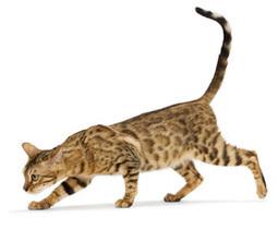 Le comportement alimentaire du chat | Edenzo - L'information et l'actualité des chiens et chats | Edenzo.com | Scoop.it