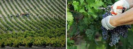 Greg Jones Turns Up The Heat on Wine & Climate Change | Grande Passione | Scoop.it