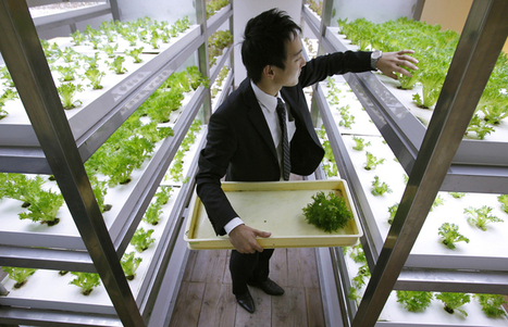 Urban farm building by KonoDesigns in Tokyo | Aspect 1 | Scoop.it