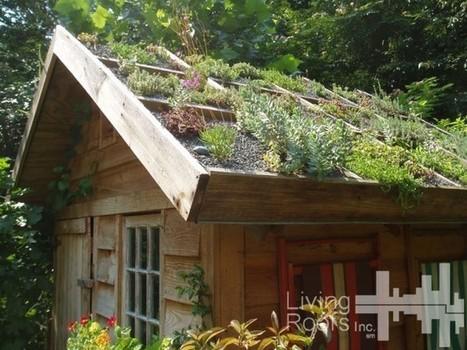 Créer soi-même une toiture végétalisée | Le flux d'Infogreen.lu | Scoop.it