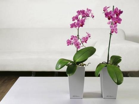 Lechuza self watering planters collection,plant containers,lechuza pots,gover | 123Coimbatore | Scoop.it