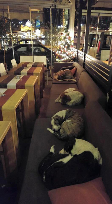 This Coffee Shop Lets Stray Dogs Sleep Inside Every Night When The Customers Leave | animals and prosocial capacities | Scoop.it