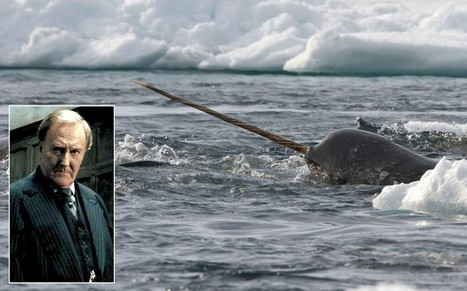JK Rowling denies finding Harry Potter inspiration on narwhal tusk | No Such Thing As The News | Scoop.it