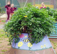 Kitchen Gardens - Teachers - Learning resources   Sustainability   Scoop.it