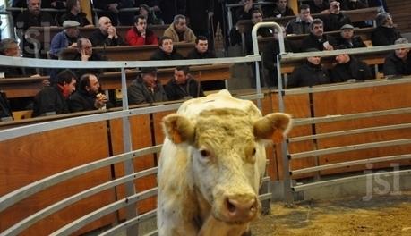 St Christophe-en-Brionnais (Saône-et-Loire). La direction générale de l'alimentation au marché | Services vétérinaires | Scoop.it