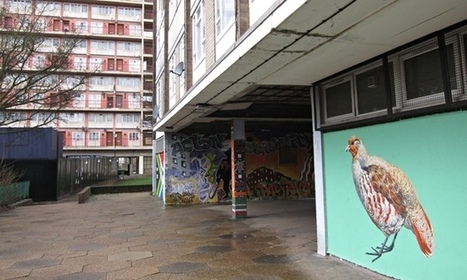 Warning signs: why street artist ATM is painting London's endangered birds - The Guardian | Good News for Artists | Scoop.it