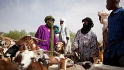 La crise humanitaire se poursuit au Mali, loin des projecteurs | SécuriteAlimentaireSahel | Scoop.it