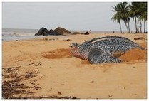 La Guyane se donne 10 ans pour améliorer son offre touristique   Location-saisonnière   Scoop.it