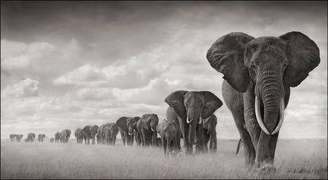 "Africa's Wildlife Through Nick Brandt EyesBest Bookmarks | Best Bookmarks | ""Cameras, Camcorders, Pictures, HDR, Gadgets, Films, Movies, Landscapes"" 