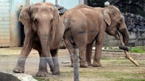 La justice épargne les éléphantes de Lyon | Balades Lyonnaises | Scoop.it