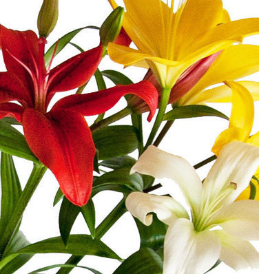 Acquire Mothers day flower delivery   Fresh Flowers in Australia   Scoop.it