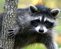 Tell Animal Planet to Stop... - The Petition Site | The Great Outdoors | Scoop.it