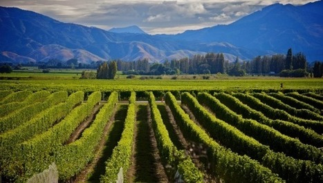 New Zealand: Small wineries struggle to make profit | Vitabella Wine Daily Gossip | Scoop.it