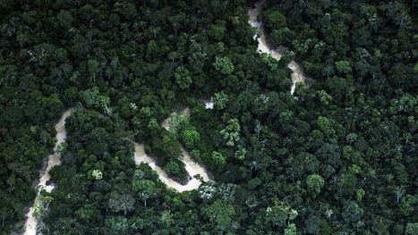 Isolated Amazon tribe makes contact with scientists | News You Can Use - NO PINKSLIME | Scoop.it