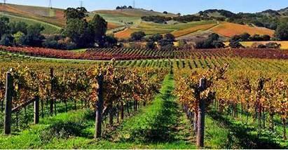 Esportazioni di vino. La Francia superata dalla Spagna e dall'Italia (Wow!) | Accoglienza turistica | Scoop.it