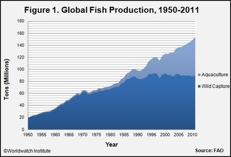 World's Insatiable Appetite for Fish Decimates Wild Fish Population | OUR OCEANS NEED US | Scoop.it