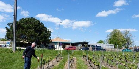 Pesticides : un vignoble se préoccupe des riverains   Saint André Avance   Scoop.it