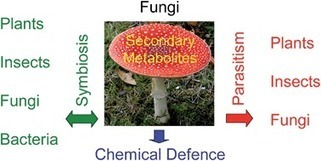 Chemical ecology of fungi - Natural Product Reports   LGN   Scoop.it