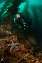 5 Tips: Diving in Kelp | All about water, the oceans, environmental issues | Scoop.it