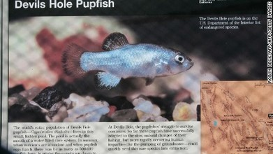 One of rarest fish dead after drunken rampage | GMOs & FOOD, WATER & SOIL MATTERS | Scoop.it