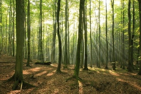 Artificial Forest Converts Sunlight Into Oxygen | green streets | Scoop.it