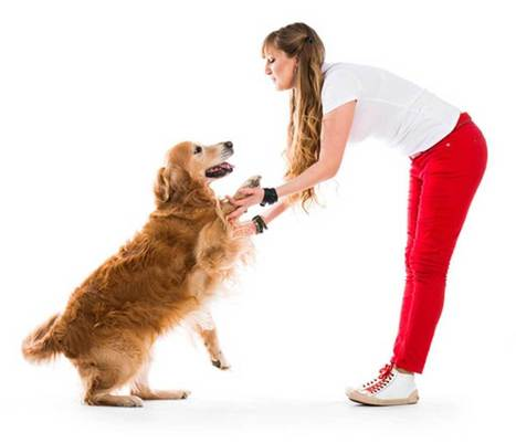 Why Dogs Jump to Greet | NuVet Plus Reviews | Scoop.it