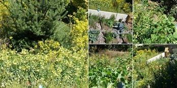 Favoriser la biodiversite au potager. | Potager & Jardin | Scoop.it