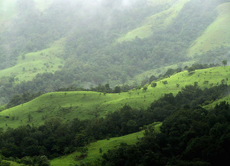 India Aims to Break World Record by Planting 50 Million Trees in 24 Hours   Le It e Amo ✪   Scoop.it