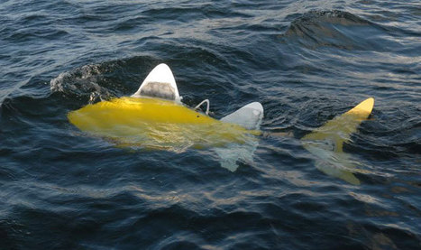 Robot Fish Takes To Sea To Fight Pollution   Social Foraging   Scoop.it