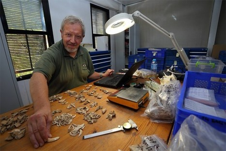 Archaeozoologists open bone lab at Ephesus | LVDVS CHIRONIS 3.0 | Scoop.it
