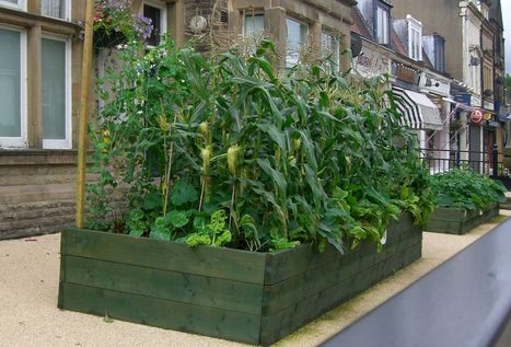 Comment une VILLE peut devenir AUTOSUFFISANTE en fruits et légumes ? | jardins partagés | Scoop.it