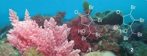 Mahorones, Highly Brominated Cyclopentenones from the Red Alga Asparagopsis taxiformis | Science | Scoop.it