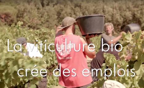 Emploi : résultats de l'enquête sur la filière vin bio   Winemak-in   Scoop.it