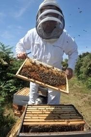 L'Europe en sérieux manque d'abeilles | Toxique, soyons vigilant ! | Scoop.it