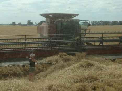 Contract Harvesters Keeping It Safe! | Employment in OHS in Australia | Scoop.it