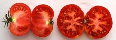 A tomato comes back home | Agricultural Biodiversity | Scoop.it