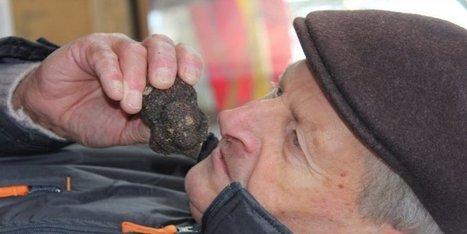 La truffe arrive doucement   Agriculture en Dordogne   Scoop.it