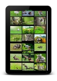 Animal Sounds & Pics For Kids - Android Apps on Google Play | Animal Sounds & Pics For Kids | Scoop.it