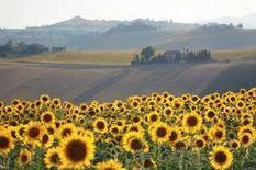 Le Marche Region of Italy: A Less Expensive Tuscany for Expats by escapefromamericamagazine | Le Marche another Italy | Scoop.it