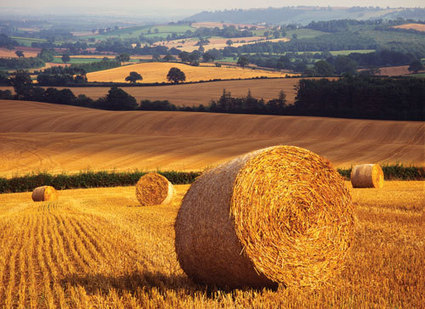 SHP Online | Straw bales: handle with care | Health and safety at work | Scoop.it