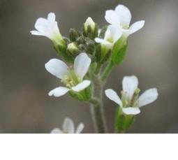 How petals shape up | कृषी व्हिजन | Scoop.it