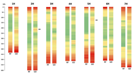 Plant J: Sequencing of 15,622 gene-bearing BACs clarifies the gene-dense regions of the barley genome (2015) | Publications from The Sainsbury Laboratory | Scoop.it